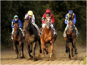 ставки на лошадей